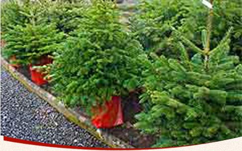 Weihnachtsbaum verkauf bad honnef hof kickartz - Obi weihnachtsbaumverkauf ...